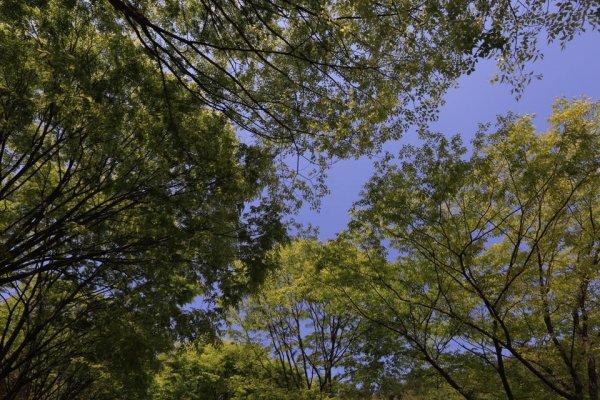 摄理月明洞_自然圣殿_境内榉树