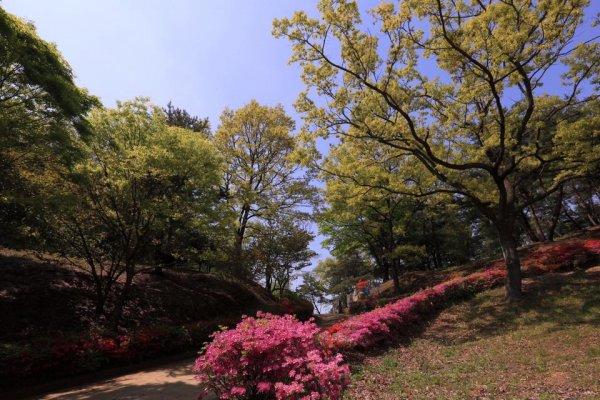 摄理月明洞_自然圣殿_文化馆步道的春天风景(1)