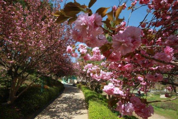摄理月明洞_自然圣殿_文化馆步道的春天风景(2)