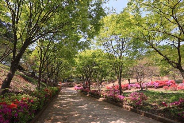 摄理月明洞_自然圣殿_文化馆步道的春天风景(4)