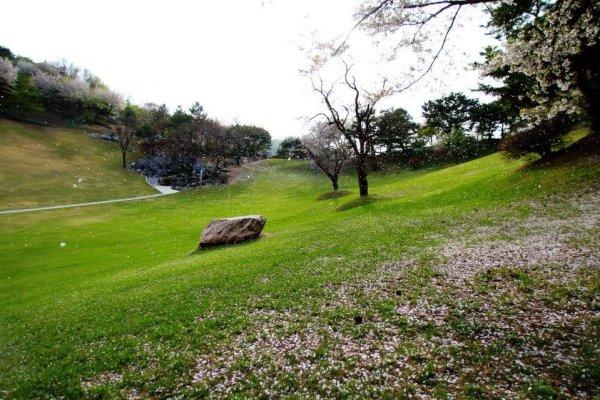 摄理月明洞_自然圣殿_春天樱花散落的草坪景色