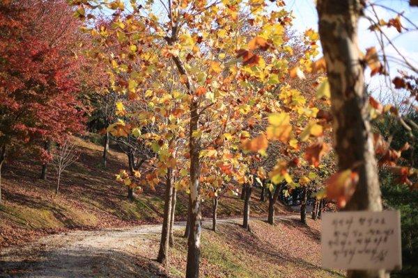 摄理月明洞_自然圣殿_枫树_步道小径