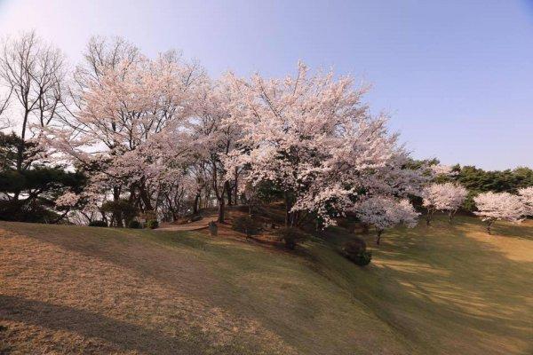 摄理月明洞_自然圣殿_草坪上方的山行步道_春天景色