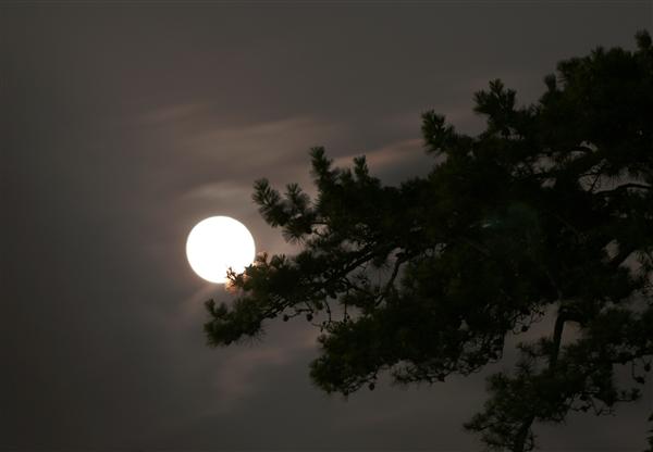 月明洞, 作品松树, 郑明析牧师, 摄理教