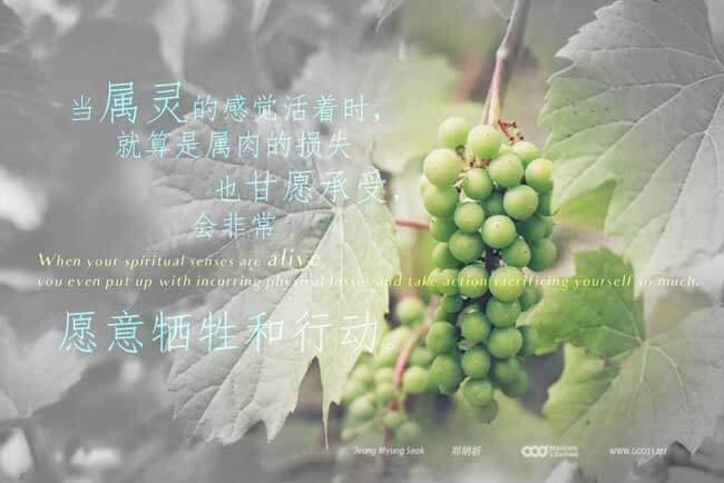真葡萄树,摄理教导,牺牲,翠绿的生命