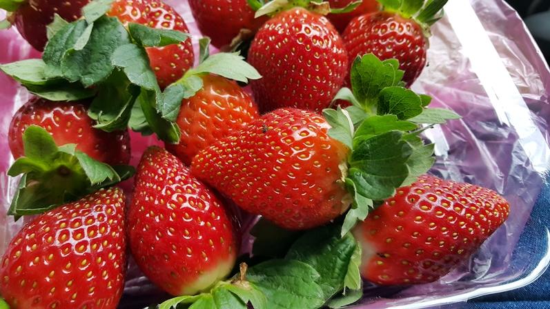 摄理灵修会之金马仑草莓