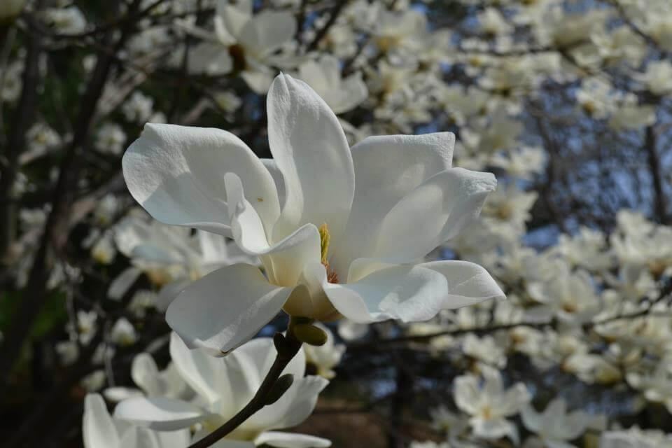 《与诗的相遇》系列报导 (下篇)——灵感泉源来自于神