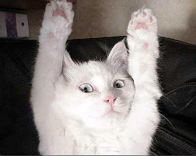 Giơ tay lên 举手